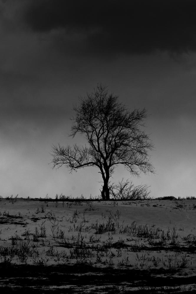 Monochrome, moody, solitary, tree,