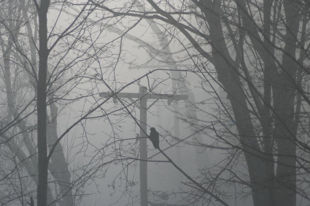 Fog, Foggy, Crow, silhoutte, moody, monochrome