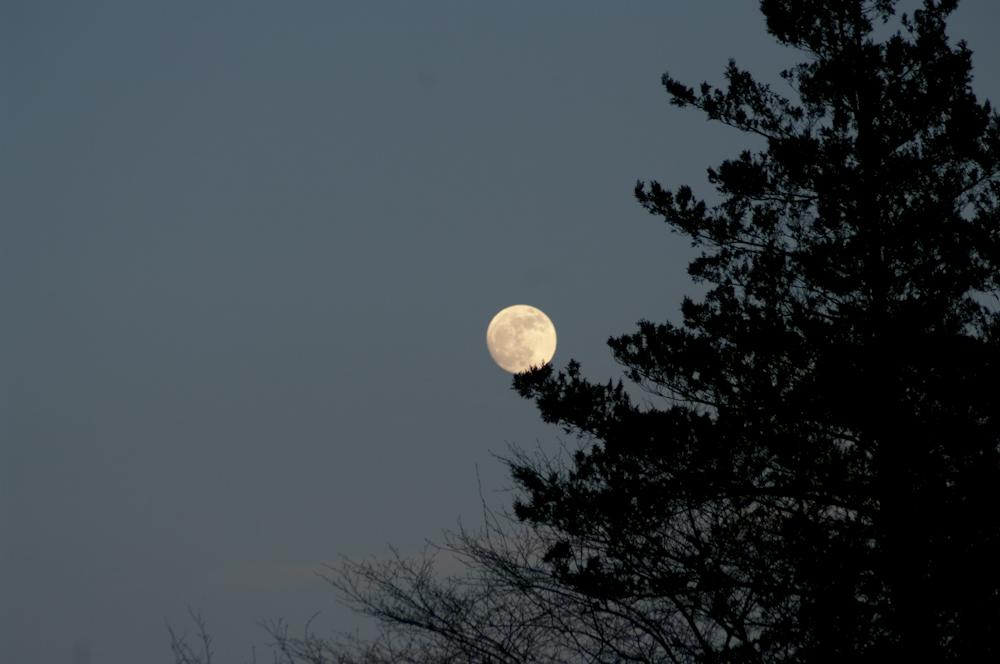 Moon, good night, tree, silhoutte