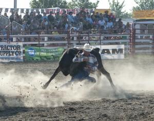 Goshen Stampede, Rodeo, Goshen Connecticut, cowboy, steer wrestling, cow wrestling