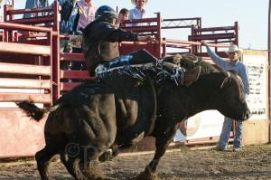 Goshen Stampede, Rodeo, Goshen Connecticut, bull riding, bullriding, cowboy